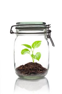 sprouting plant in a closed jar
